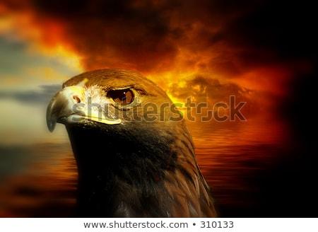 Águia pássaro modelo vetor arte ilustração Foto stock © vector1st