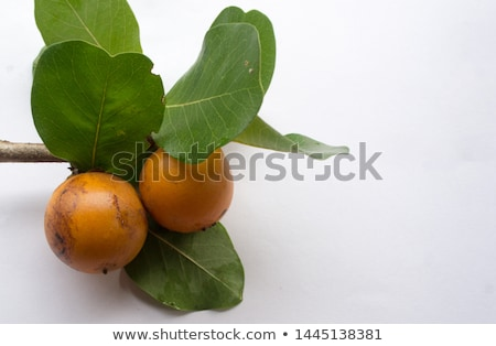 A Diospyros rhodocalyx plant Stock photo © bluering