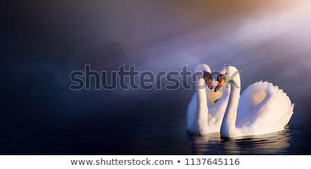 Coppia illustrazione silhouette acqua lago uccelli Foto d'archivio © adrenalina
