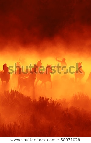 Man chasing the horse Stock photo © bluering