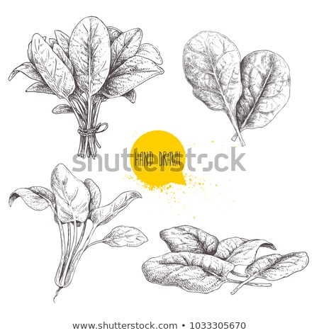 fesh green leaves vector background Stock photo © SArts