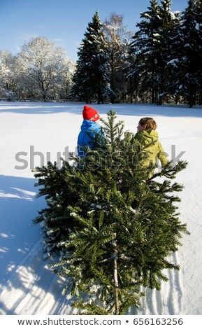 Girl dragging Christmas tree in snow Stock photo © IS2