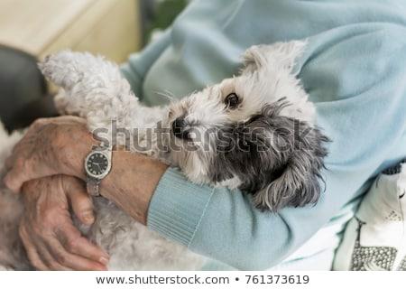 Stockfoto: Rijpe · vrouw · hond · home · vrouwen · portret · witte