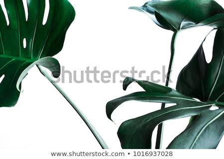 зеленый тропические листьев природы дерево лес Сток-фото © Virgin