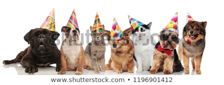 cute group of seven party dogs and cats  Stock photo © feedough