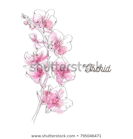 Wort flora Wasserfarbe Blumen Dekoration isoliert Stock foto © Natalia_1947