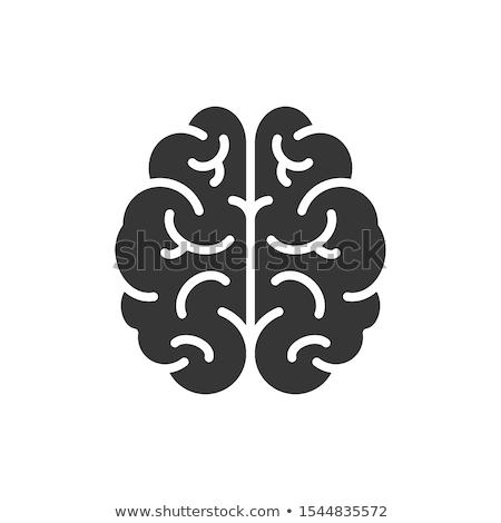 gezamenlijk · anatomie · normaal · illustratie · arts · gezondheid - stockfoto © blaskorizov