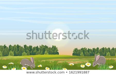 Rural village scène illustration arbre route Photo stock © colematt