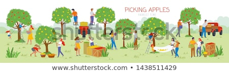 farmer with basket and apples vector illustration stock photo © robuart