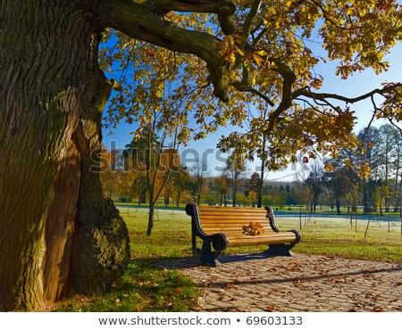 Parque banco carvalho árvores Bélgica Foto stock © artjazz