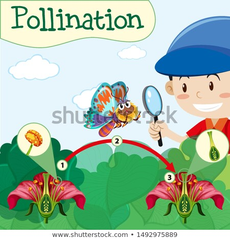 Pollination diagram with boy and flower Stock photo © bluering