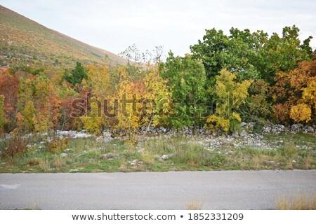 Doskonały dąb zielone dziedzinie Zdjęcia stock © mybaitshop
