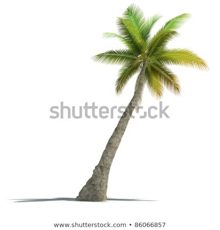 3d render ada beyaz ağaç güneş Stok fotoğraf © Melvin07