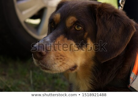Grey-haired man sat in garden Stock photo © photography33