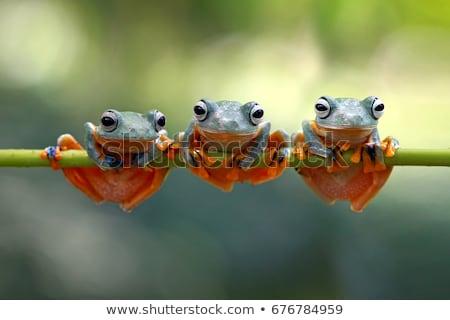 kurbağa · bahçe · gölet - stok fotoğraf © smithore