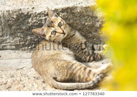 Cat with sharp eyesight on the ground Stock photo © kawing921