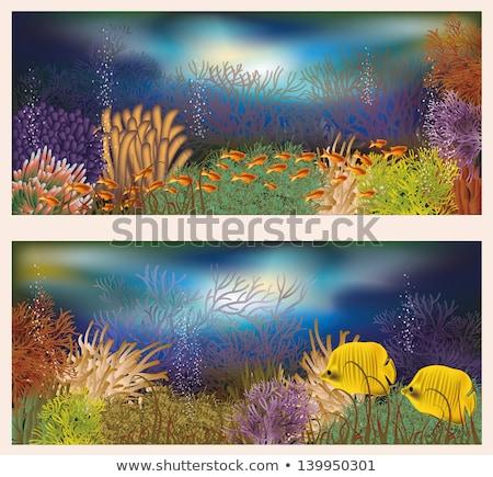 two banners underwater world vector illustration stock photo © carodi