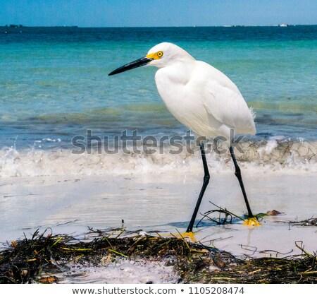 Plaj beyaz siyah bacaklar sarı ayaklar Stok fotoğraf © saje