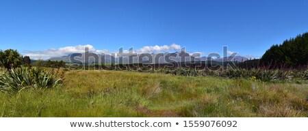 Rakatu Wetlands Stock photo © Hofmeester