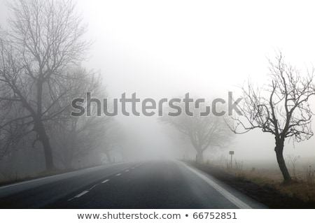 Bare Tree and Street Light in Early Morning Fog stock photo © dbvirago
