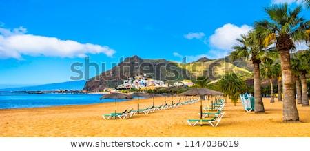 Praia tenerife Espanha costa linha Foto stock © neirfy
