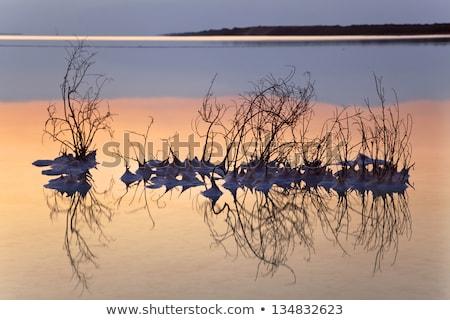 dode · zee · zout · gedekt · bush · plant · Israël - stockfoto © eldadcarin