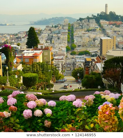 coit tower flowers san francisco california stock photo © billperry