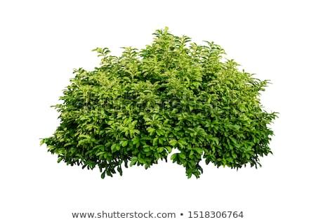 Verde Bush erboso radura albero foglia Foto d'archivio © taden