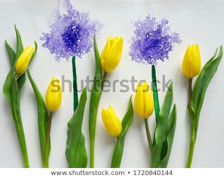 Голландии весны Пасху цветы природы Сток-фото © tannjuska