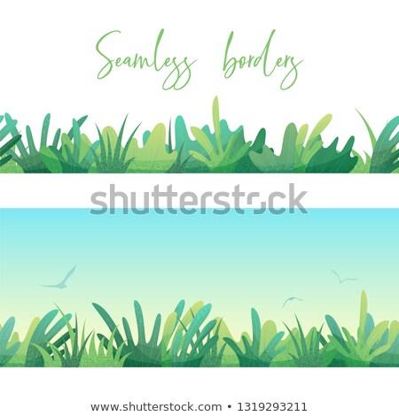 herbe · verte · fleurs · insectes · isolé · blanche · design - photo stock © heliburcka