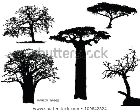 crooked branches in africa forest Stock photo © compuinfoto