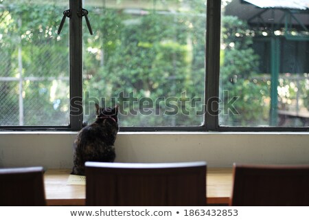 Cat sitting on coffee shop wooden chair Stock photo © nalinratphi