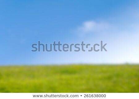 Herbeux colline printemps ciel bleu flou photographie Photo stock © frannyanne