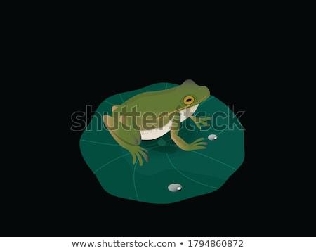 лягушка · болото · сидят · животного - Сток-фото © badmanproduction