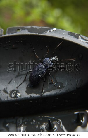 黒 · カブトムシ · 春の花 · 昆虫 · 黄色の花 - ストックフォト © sirylok