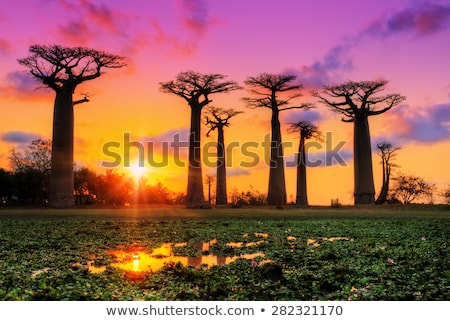 sunset in madagascar Stock photo © lkpro