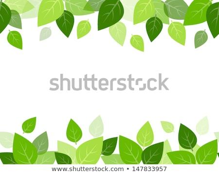 Green leaves border. EPS 10 Stock photo © beholdereye
