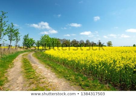 Foto d'archivio: Campi · alberi · cielo · blu · nubi · primavera