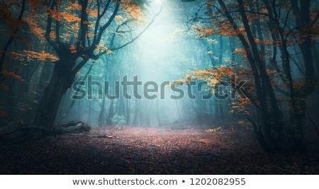 vector · najaar · landschap · vogels · bomen · hemel - stockfoto © tracer