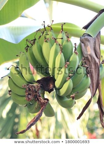 здорового Летние фрукты продовольствие Sweet свежие фрукты белый Сток-фото © Konstanttin
