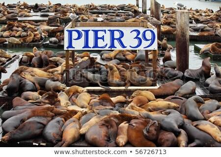 sea lions in San Francisco Stock photo © prill