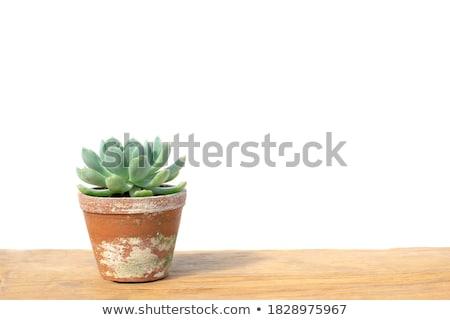 Rustique argile pot isolé blanche cuisine Photo stock © homydesign