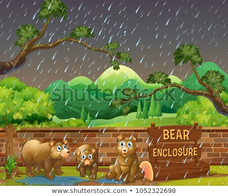 üç ayılar hayvanat bahçesi gün örnek yağmur Stok fotoğraf © colematt