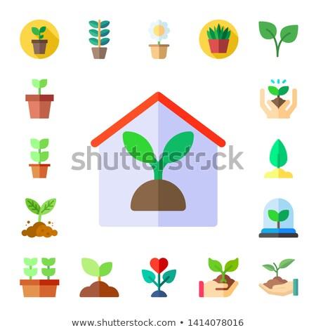 Növény hajtás vektor ikon izolált kert Stock fotó © nosik