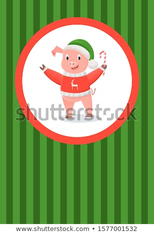 varken · Rood · trui · rendier · groene · hoed - stockfoto © robuart