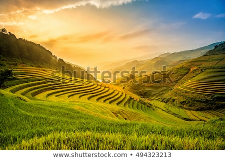 Image of beautiful Terraced rice field in water season and Irrigation from drone,Top view of rices p Stock photo © galitskaya