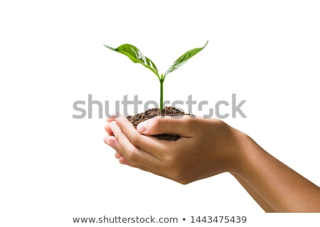 Hands holding young green plant, Isolated on white. The concept of ecology, environmental protection Stock photo © galitskaya