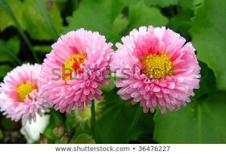 tropikalnych · kwiat · zielony · liść · biały · tablicy - zdjęcia stock © hlehnerer
