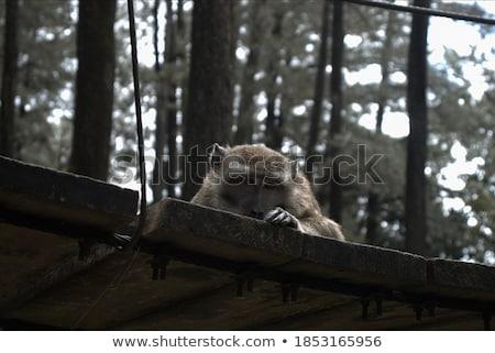 обезьяны изолированный белый край кадр лице Сток-фото © THP