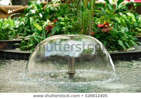 stagno · paesaggistica · acquatico · impianti · acqua · gigli - foto d'archivio © julietphotography
